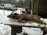 chasse gros gibier 77 limitrophe 60/02