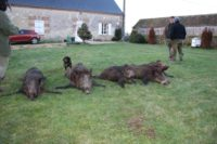 action de chasse grand gibier 37