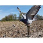 Chasse aux Pigeons Ramiers au Sol – Région Centre 2021-2022