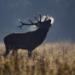 chasse-andalousie-et- international